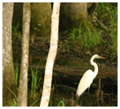 wildlife In Hilton Head Lakes